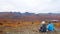 Arctic Day: Hiking Tour Half or Full-Day