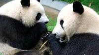 Full-Day Private Chengdu and Giant Panda Breeding Center Tour