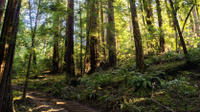 Muir Woods and Sausalito Tour by Hop-On Hop-Off Bus
