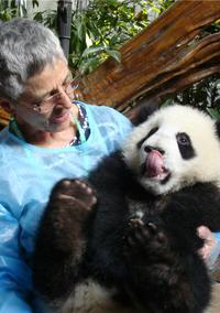 Private Tour: Be a Panda Volunteer for One Day at Dujiangyan Giant Panda Center