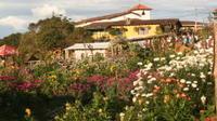 Santa Elena and Guatape Antioquia Touristic Highlights
