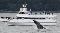 Kenai Fjords and Resurrection Bay Half-Day Cruise