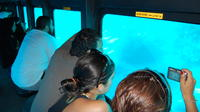 Submarine Reef Tour in Sharm El Sheikh