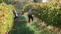 Wine Tour and Tasting in Organic Winery in Umbria