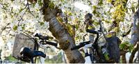Visit of Provence and the Carrieres de Lumieres by Electric Bike from Saint-Rémy-de-Provence