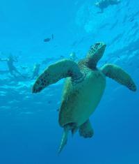 Hanauma Bay Guided Snorkel Tour with Underwater Photos
