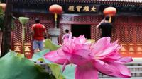 Private Spiritual Tour of Confucianism Taoism and Buddhism including Lunch and Tea Ceremony