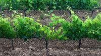 Private Tour: Montalcino Wine Tasting Experience