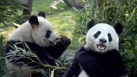 16-Day Small-Group China Tour: Beijing, Xi'an, Guilin, Chengdu, Chongqing, Yangtze River Cruise and Shanghai