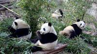 9-Day Small-Group China Tour: Beijing - Xi'an - Chengdu