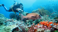 Introductory Scuba Diving in Bali