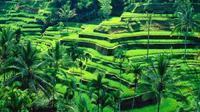 Private Tour: Ubud Tanah Lot Experience