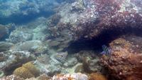 Snorkeling Adventure at Sharp Island