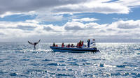 Small-Group Reykjavik RIB Whale Watching Cruise