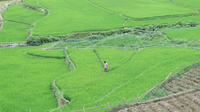 Half-Day Trekking Trip to Sapa Valley Including Y Linh Ho Visit