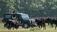 4x4 Safari in the wild Camargue from La Grande Motte (half day trip in a privatized vehicle)