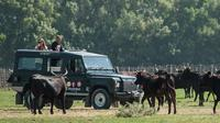 Camargue 4x4 Safari from Aigues Mortes (in a privatized vehicle !)