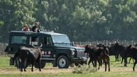 Camargue 4x4 Safari from La Grande Motte (half day trip)
