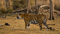 7-Night Golden Triangle Tour and Ranthambore Wildlife Safari From Delhi