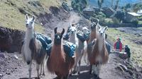 Lares Trek to Machu Picchu: 4-Day Tour
