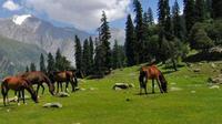 Full-Day Private Trip To Thajiwas Glacier And Zero Point From Srinagar