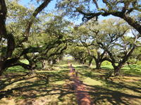 Combo Oak Alley Plantation and New Orleans City Tour