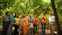 Cacao Plantation and Chocolate Factory Tour