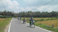 Half-Day Lagoon and Village Cycling Tour in Galle