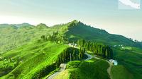 3-Day Eastern Paradise Ilam Tour from Kathmandu