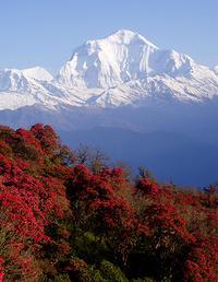 8-Day Annapurna Panorama Trek from Kathmandu
