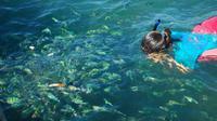 Snorkeling and Sightseeing at Koh Tan