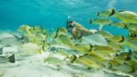 Santa Maria and Chileno Bay Snorkel Adventure