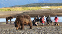 Flightseeing Tour and Wilderness Bear Viewing in an Alaska National Park