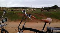 Environmental Park Bike Tour from Vilamoura