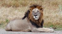 7-Day Safari of Southern Tanzania