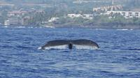 Whale Watching On The Big Island