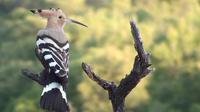 Excursión de observación de aves de cuatro días en Cataluña