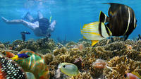 Snorkeling trip and excursion from Safaga Port in hurghada Private Car Transfers