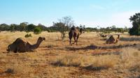 8-Day Authentic Outback Adventure Tour of Cunnamulla Including Round-Trip Air Transfer from Brisbane