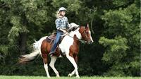Horse Riding Tour In Rhodope Mountains From Plovdiv