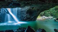 Springbrook National Park Hiking Tour Including Natural Bridge from the Gold Coast