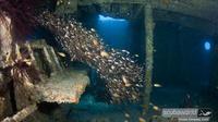 Dive the world famous ex-HMAS Brisbane wreck, one of Australia's top dive sites