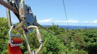 Maui Jungle Zipline Tour