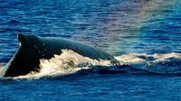 Kohala-Kona Whale Watch Sunset Cruise in Kawaihae