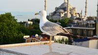 Discover Istanbul In 4-Days