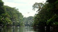 3-Day Wildlife Tour in Pacaya Natural Reserve