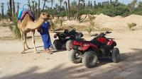 Marrakech Quad Biking and Camel Riding Tour