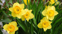 2-Day Tour of Nantucket Including the Annual Daffodil Festival