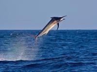 All-Inclusive Deep Sea Fishing Day Trip in Costa Rica