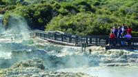 Full-Day Rotorua Shore Excursion Including Te Puia and Hells Gate Thermal Beds